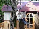 tree climbing japan johnsan